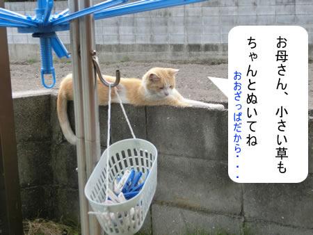 2014-07_23_06.jpg