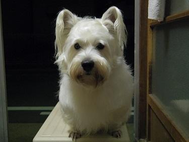 犬2!3歳