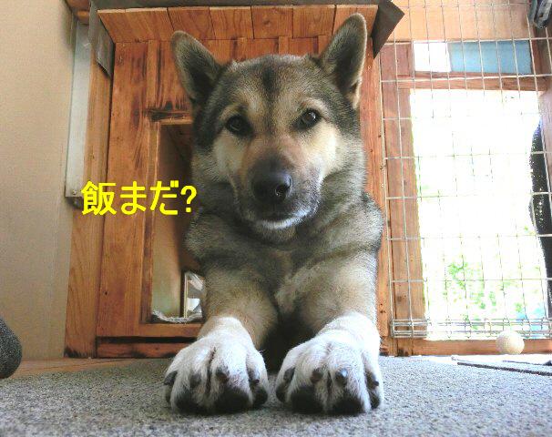 編集_ めしまだ