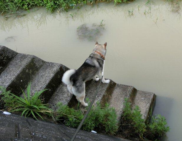 川のチェック