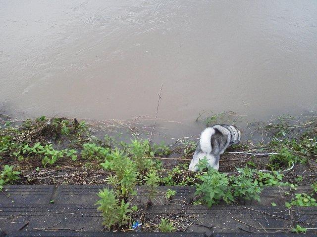 何時もの川1
