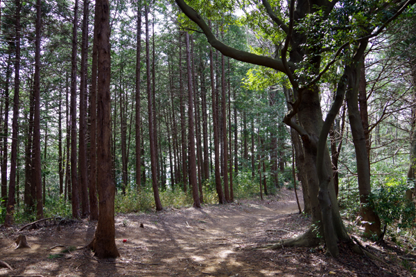 大平山11