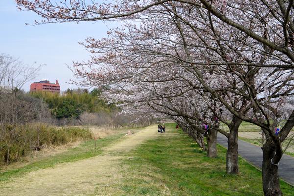 大平山23