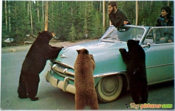 funny-bear-pictures.jpg