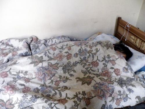 ラパスでサルモネラ菌により寝込んだ