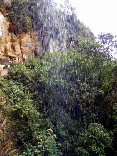 カラヒア Karajia