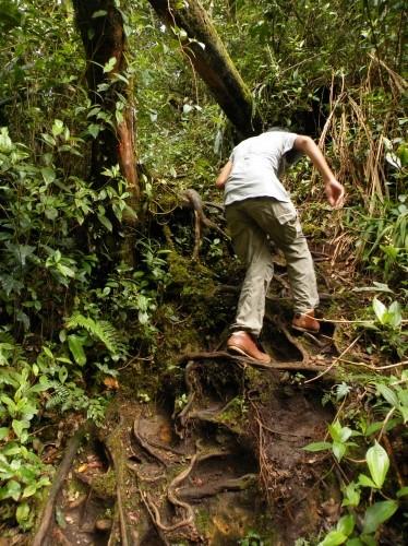 苔 ジャングル