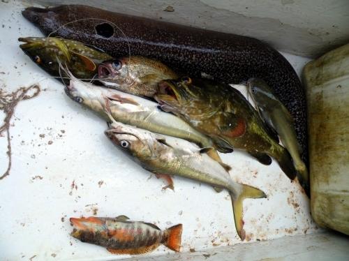 釣った魚 調理