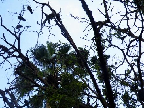 木の上にイグアナ