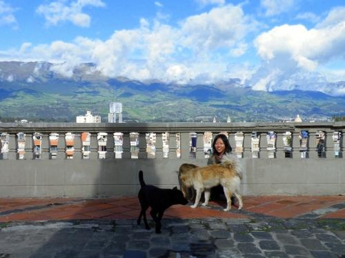 犬と散歩 リオバンバ