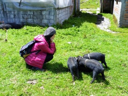サリナス Salinas 子豚
