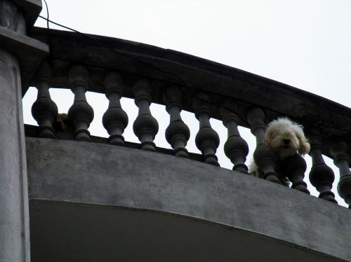 オタバロ 犬