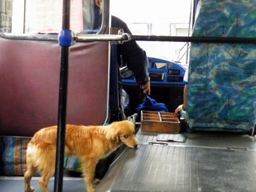 市内バスに犬