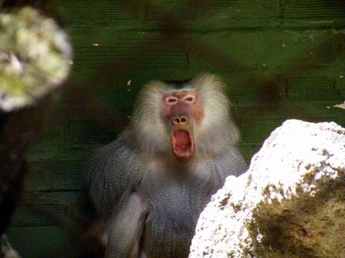 メデジン 動物園