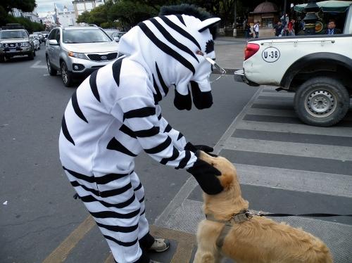 シマウマと犬
