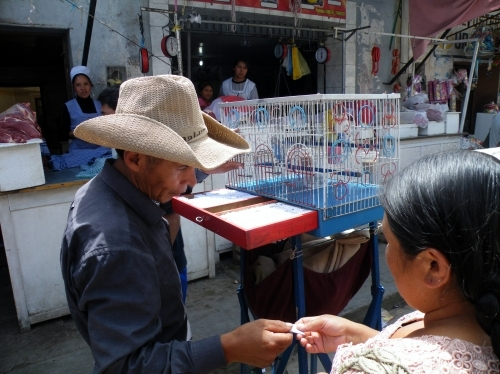 インコの占い師