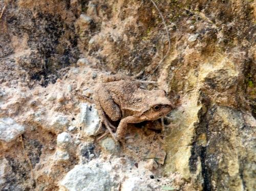 崖の下の蛙