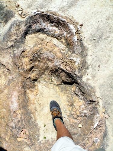 恐竜の足跡はでかい