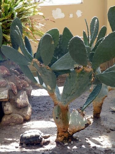 動物園 サボテン