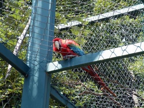 トゥカン 動物園