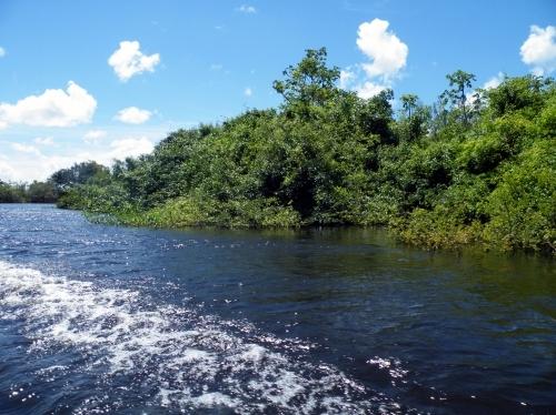 アマゾン ボートからの景色