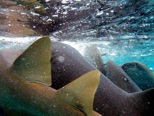 キーカーカー島 Caye Caulker 海