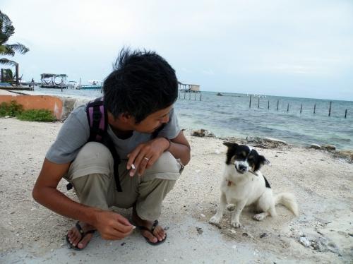 キーカーカー島 犬