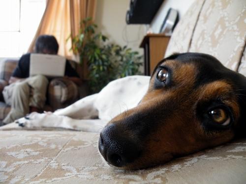 さんどらのいえ 愛犬