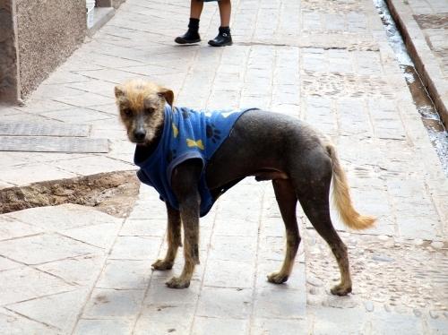 ピサック 犬