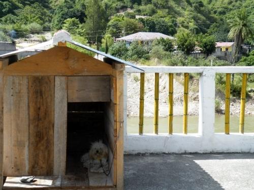 サカプラス 宿 犬