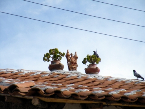 キヌア quinua