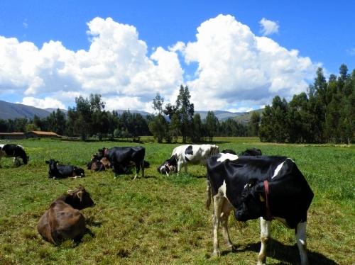 牧場 乳製品