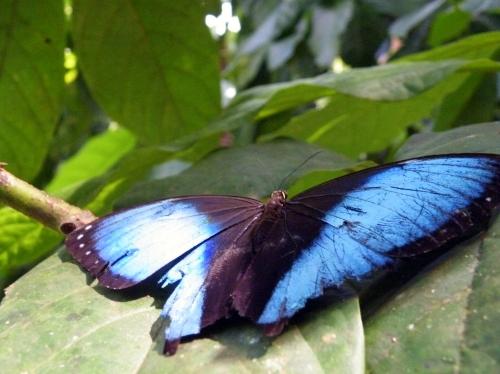 蝶々 ジャングル