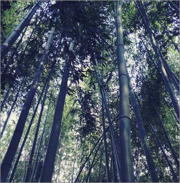 14kyoto-02.jpg