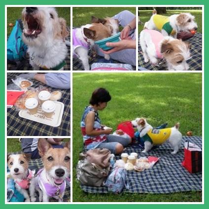 picnicpoppo9.jpg