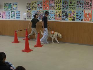盲導犬(体験1)