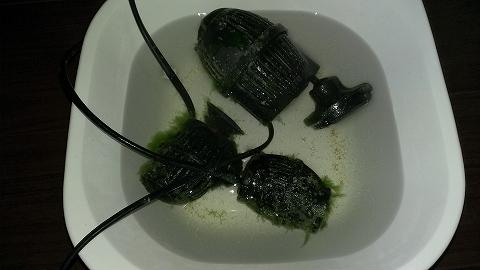 水槽不調 藻との終わりなき戦い?20140523_03