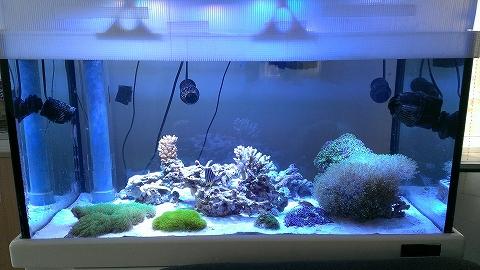 水槽不調 藻との終わりなき戦い?20140523_04