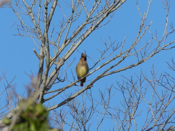 2014 04 03_さくらと鳥_2100-2