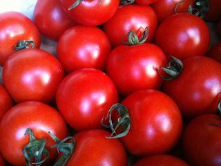tomato2014031801.jpg