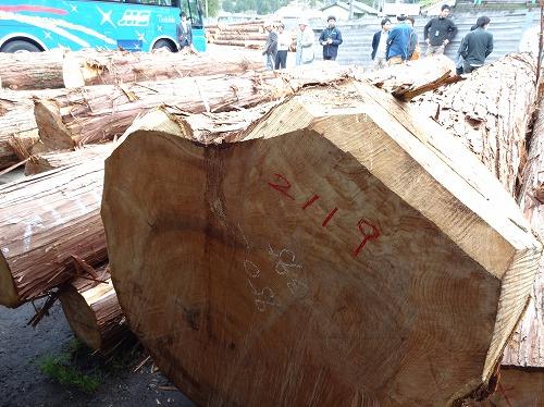 1本400万円の檜の原木
