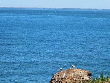 15水晶島(歯舞諸島)0601