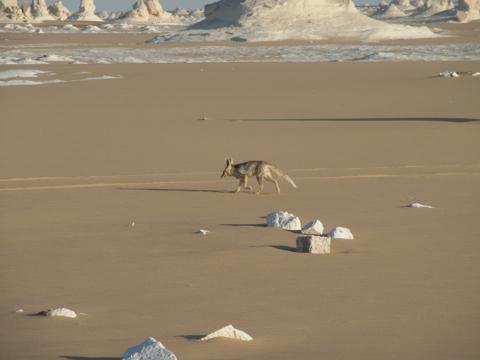 desertsafari 201406-7