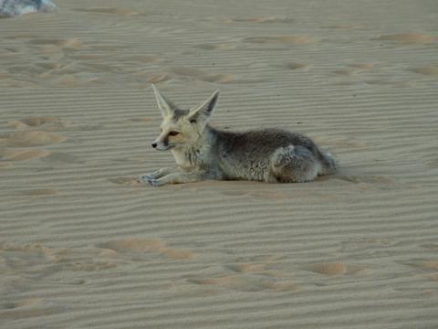 desertsafari 201406-8