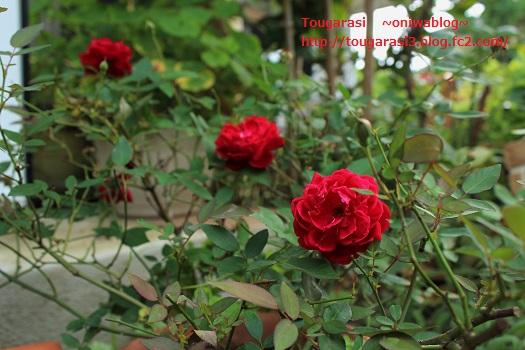 20140712niwa4.jpg