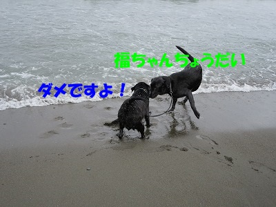 IMG_2176.jpg