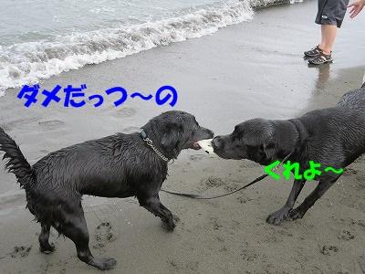IMG_2178.jpg