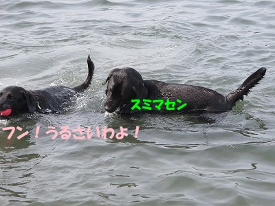 IMG_2249.jpg