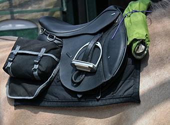 th_horses2.jpg