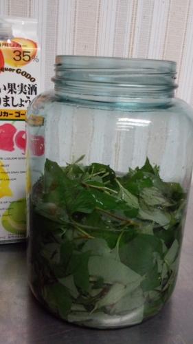 ドクダミ化粧水2